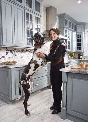 Herman, the great dane puppy